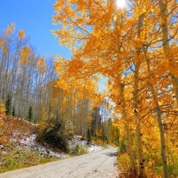 Fall In Love With Steamboat Springs, CO